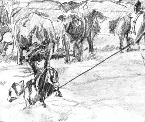 Cattle branding - pencil drawing by Lee Lee