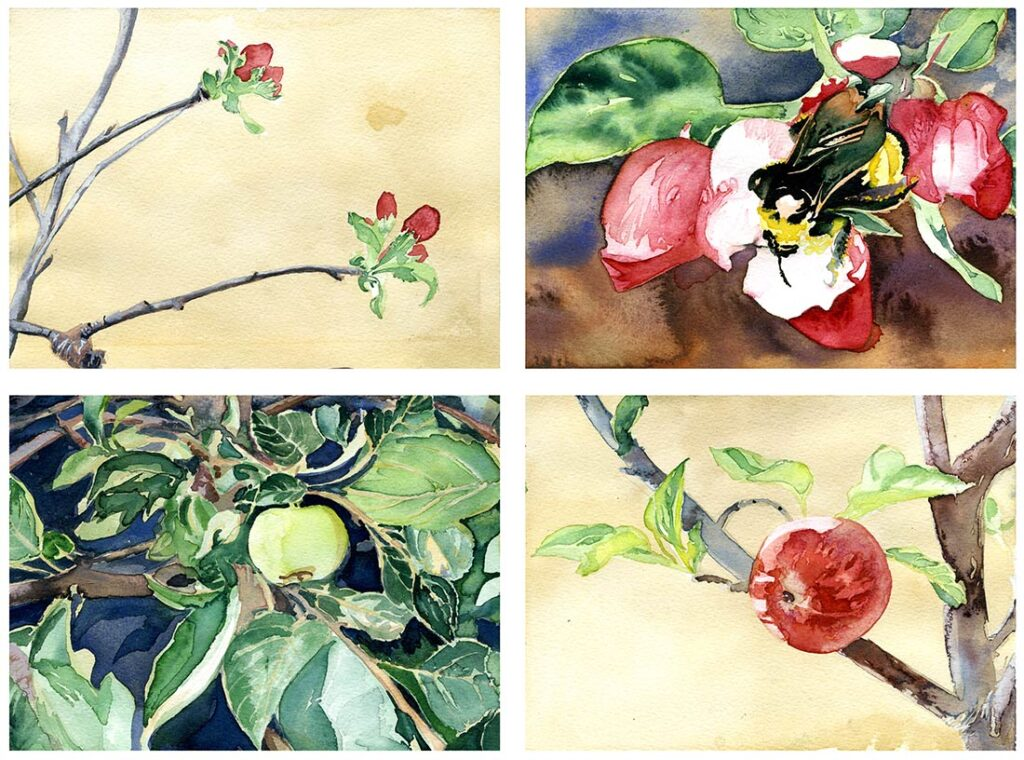 Apple - Garden Watercolor by Lee Lee, Haiku by Peter T Leonard