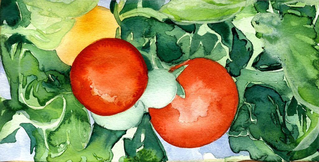 tomato - Garden Watercolor by Lee Lee, Haiku by Peter T Leonard