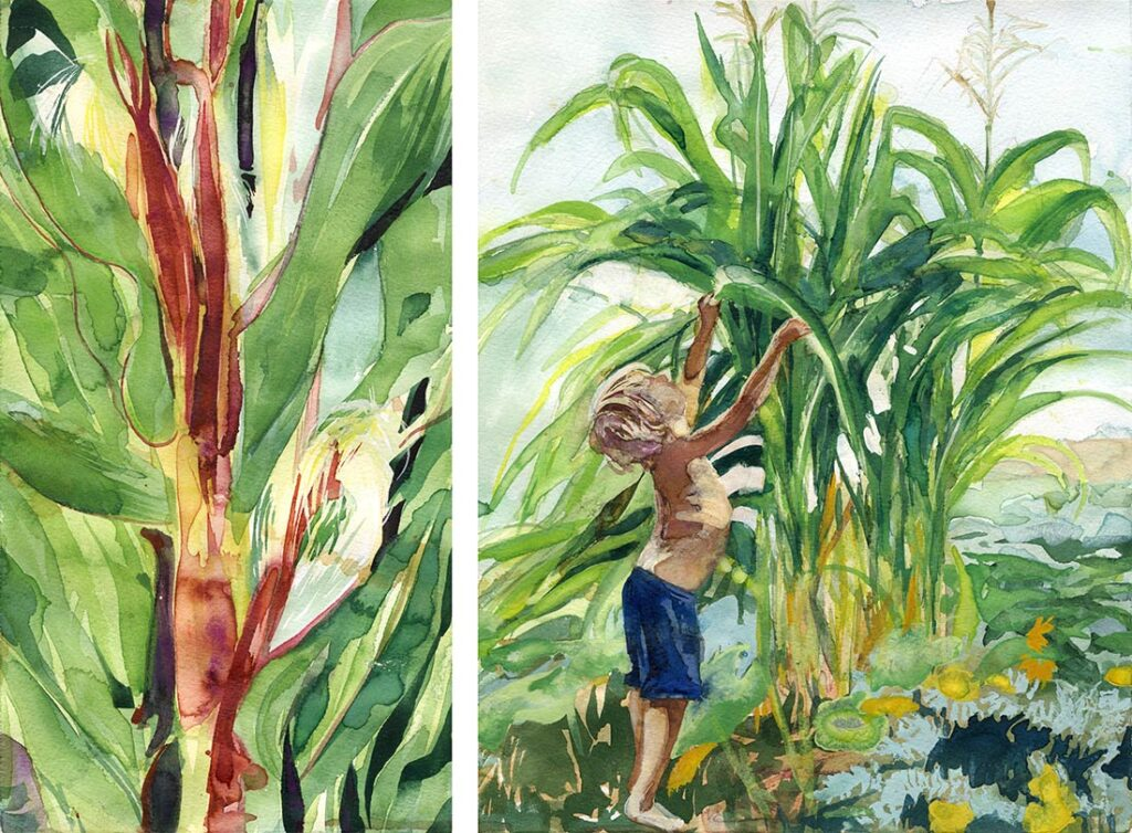 Corn - Garden Watercolor by Lee Lee, Haiku by Peter T Leonard