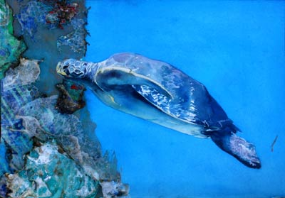 sea turtle watercolor by Lee Lee